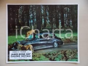 1967 JAMES BOND 007 CASINO ROYALE Lionesses attack car *Lobby card ED. FRANCESE